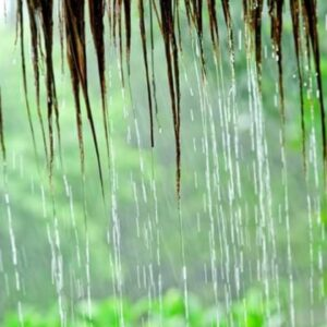#rain 2 Hour Natural Rain For Relaxing Deep Sleep,Studying,Instant Relaxation,Stress Relief,Calming