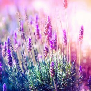 Beautiful Relaxing Music for Stress Relief ~ Calming Music ~ Meditation, Relaxation, Sleep, Spa