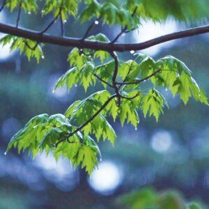 Relaxing Music & Gentle Rain Sounds - Beautiful Piano Music for Relaxation & Sleep