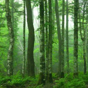 Peder B. Helland - Deep in the Forest