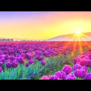 Relaxing Music for Stress Relief. Beautiful Music for Meditation, Healing Therapy, Sleep, Yoga