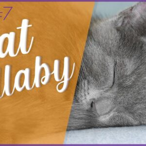 FAST Acting Sleep Music for Cats - #7 Dreamy Lullaby 💤