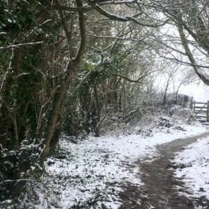 Snow Falling Through Leaves & Winter Wind Sounds for Sleep, Insomnia, Tinnitus: Natural White Noise