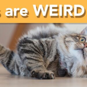 WEIRD and Wonderful Cat Traits That Are Totally Normal!