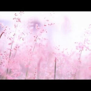 Soothing and Sweet Best Piano Relaxing Music to Relief insomniaRelaxing MusicFall asleep Fast