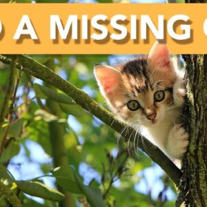 ⚠️ How to Find a Missing Cat | What To Do! ⚠️
