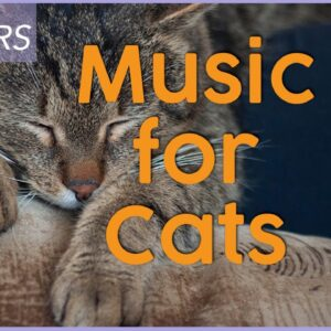 RELAXING MUSIC FOR CATS 🐾 - Over 7 Hours of Deep Sleep Lullabies!