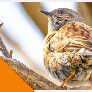 Cat TV - Garden Birds and Wildlife - Videos for Cats to Watch 4K