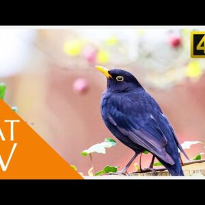 Cat TV - Movie for Cats to Watch - Garden Birds with Nature Sounds (4K)