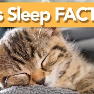 INTERESTING Facts About Cat Sleep! | Why Do They SNORE?!💤