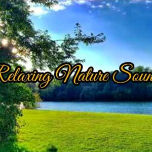 Relax 2 Hours of Birds Singing and Water Sounds - Relaxing Nature Sounds - Relaxing Birdsong
