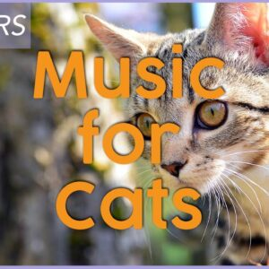 9 HOURS of Calming Music for Cats | 💤Intense Relaxation 💤| TESTED |