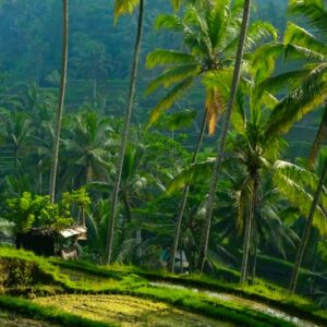 Relaxing Nature Sounds - Morning in Bali, Indonesia