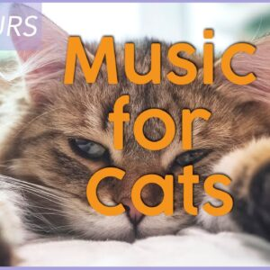 Calming Music for Cats - EXTREMELY Calming Music for Cats and Kittens 🐾