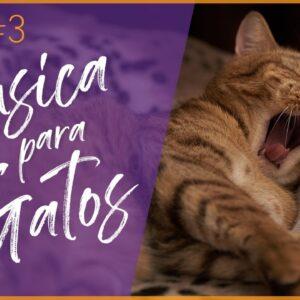 Música de Gato #3 - Instrumentais Suaves Relaxantes para Gatos e Gatinhos🎼