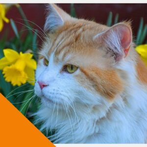 ⭐ CAT TV ⭐ - Outdoor Stimulation Video For Cats To Watch - Bird Video (4K)