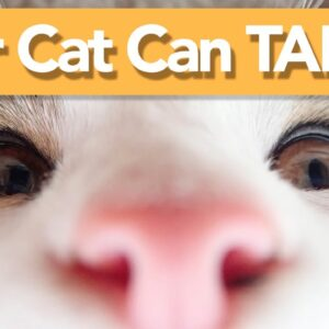 What is Your Cat Trying to Tell You?! Cat Meows and What They Mean!