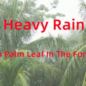 Sleep Instantly with Heavy Rain on Palm Leaf In The Forest, Rain Sound for Relax/Sleep/Study #Shorts