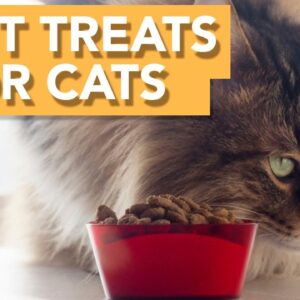 The BEST Treats for your cat! - Our TOP picks 🐾