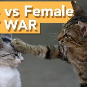 Male Vs Female Cats - WHICH IS BETTER?