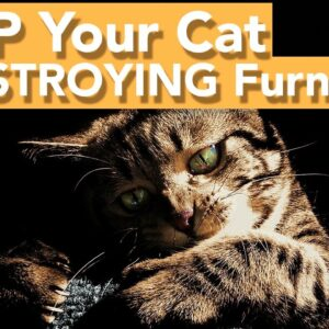 Stop Your Cat Scratching Furniture - It's Easier Than You Think!
