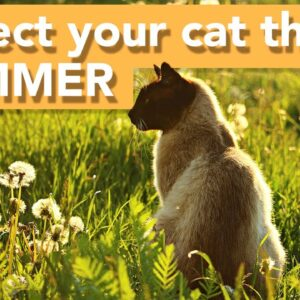 ☀️ How to Keep Your Cat Cool in the Summer (TOP TIPS 2020) ☀️