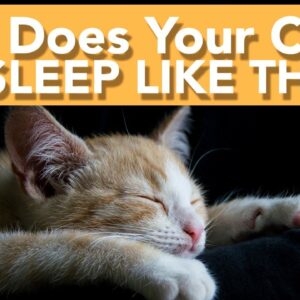 What Cat Sleeping Positions MEAN - The Last One Will Make You Laugh!!
