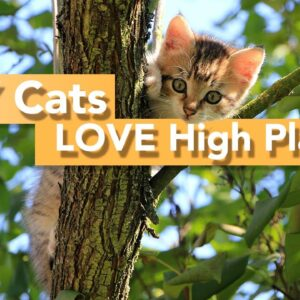 7 Reasons Your Cat Likes High Places - We Bet You Didn't Know THIS!