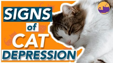 How to Tell If a Cat Has Depression - TOP SIGNS