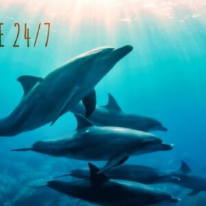 🔴  Angelic Music & Underwater World • Music For Healing Body, Soul. Whales And Dolphins