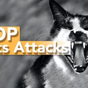 Why Does Your Cat ATTACK You When Petting Them - TOP REASONS