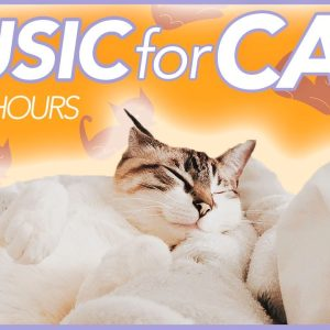 cat music so so relaxing WOW