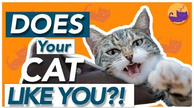 TOP SIGNS Your Cat Likes and Trusts You - Does Your Cat Show Their Belly?